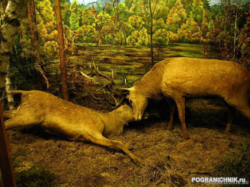 Экспонаты музея природы