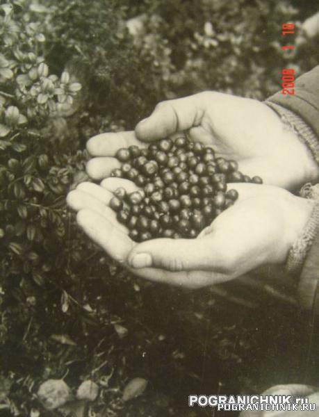Никель 1984г. Брусника - Заполярный фрукт