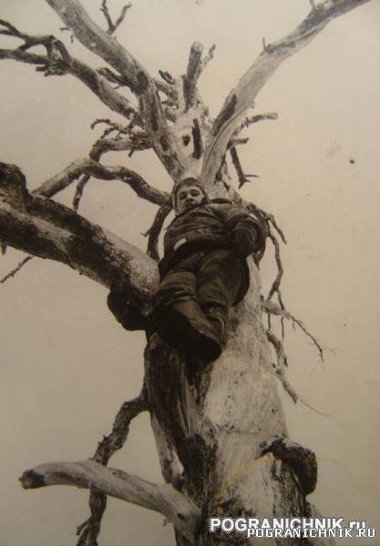 Никель 1984. Просто залез на прикольное дерево. Никель.