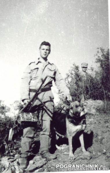 боевой пес Дозор (муштив, 86 год)