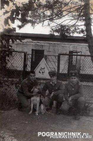 Питомник СС Пазовый   1985