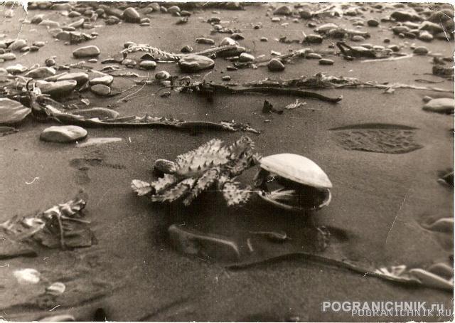 Kamchatsky Krab