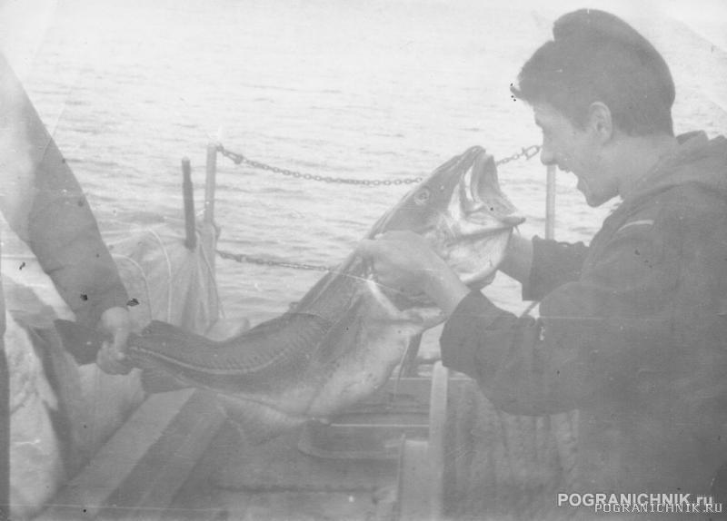 Моряк и рыба.
