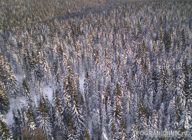 Снова лес, но уже с высоты птичьего полёта.