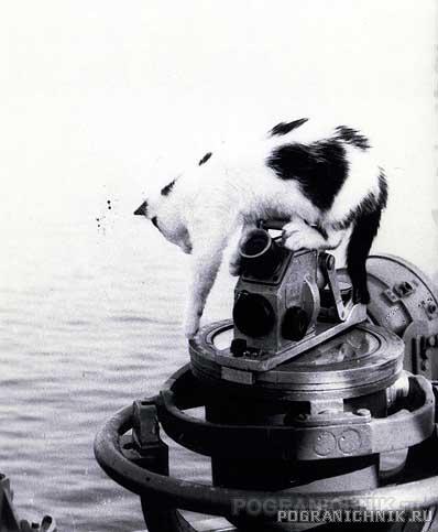 кошка Клавка.jpg