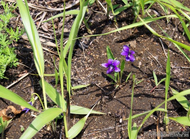 Цветы Приморья