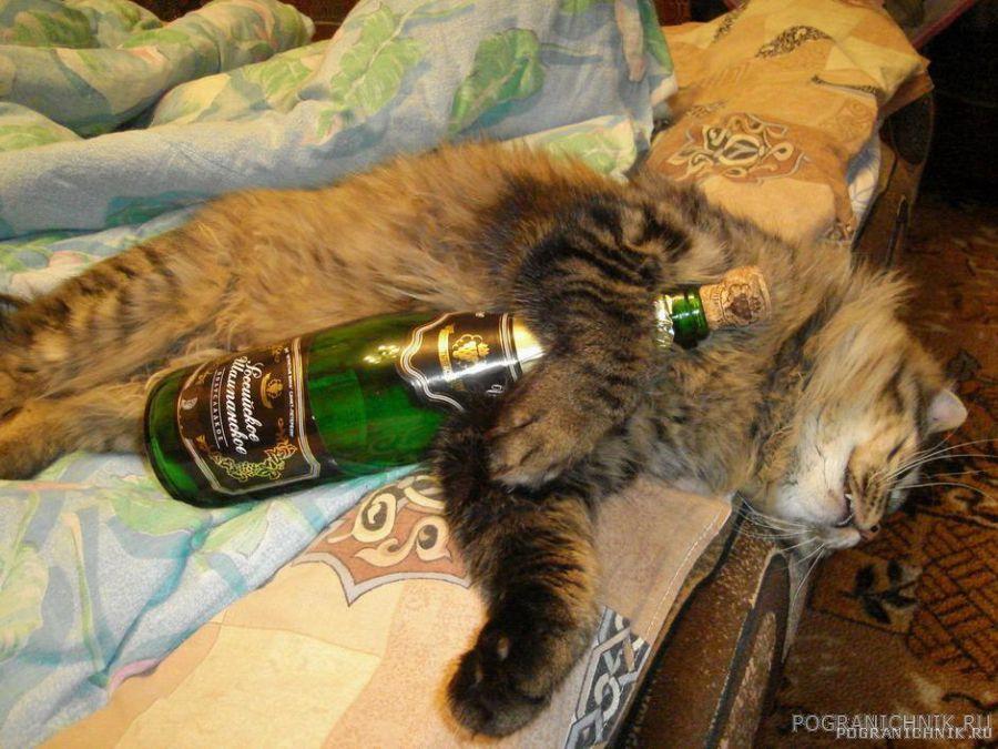 Пьяный Тимоха