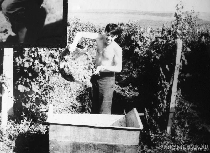 1984 год - виноградники Анапы