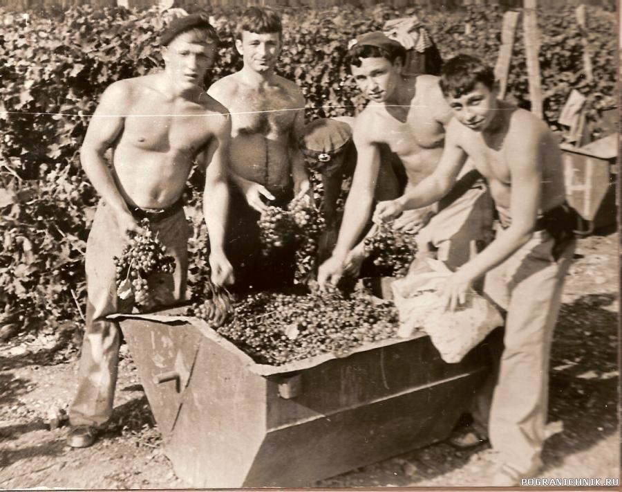 Сбор винограда 2
