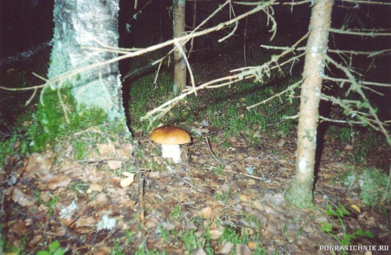 И один в лесу воин...
