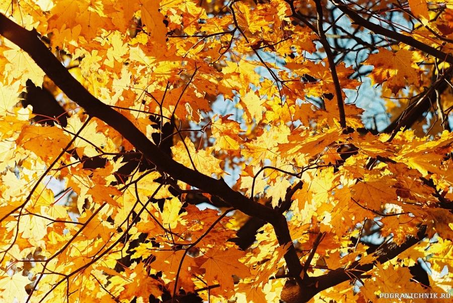 Сгорает осень,листьями горя...