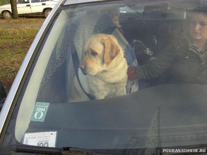 Мой правильный пасажир