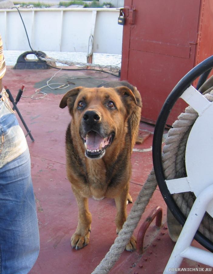 Корабельный пес Никотин