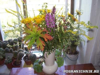 Полевые цветы на фоне кактусов