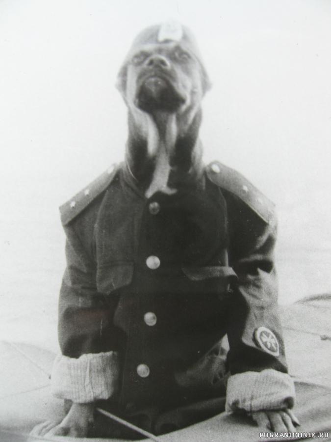 внук Шарикова на правом торпедном аппарате
