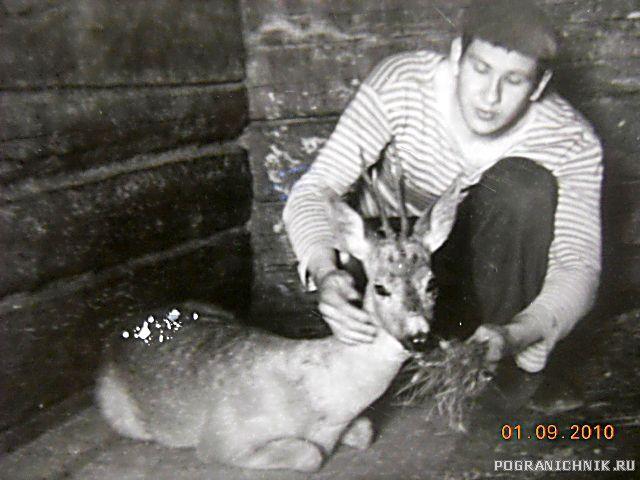 ПТН-6 спасенный олень