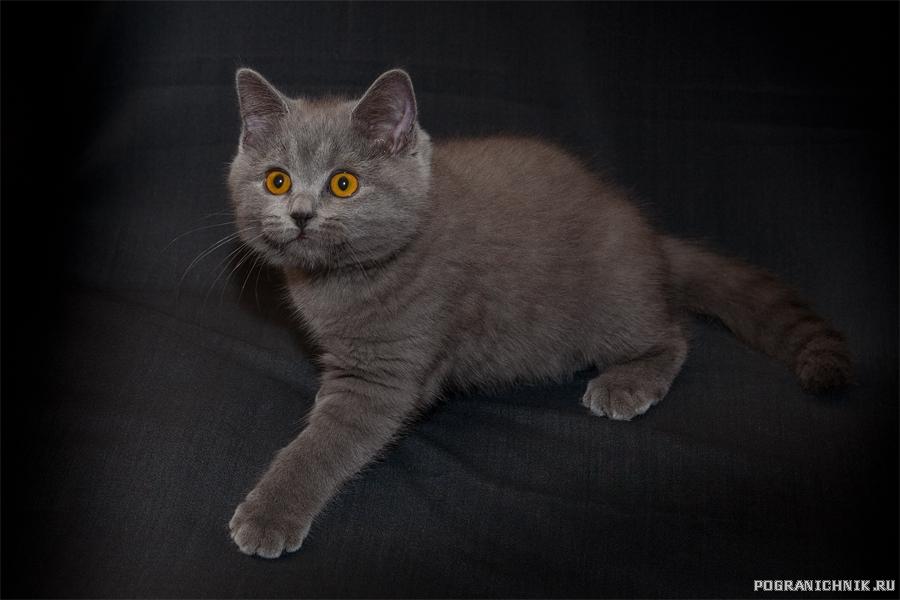Старшая сестра котейства
