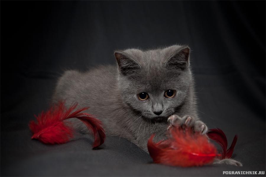Средний братик котейства