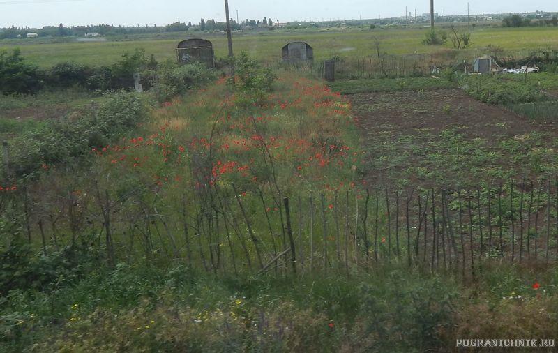 Крым ещё не знает, что мак это не цветы